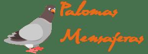 Paloma Mensajera de Carrera